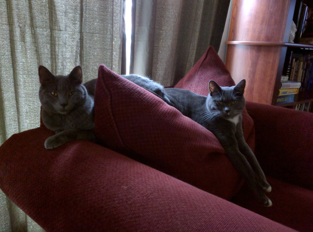 Gertrude (r.) and Alice know it's Caturday. .